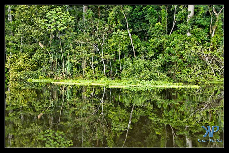 Amazon Jungle in Peru
