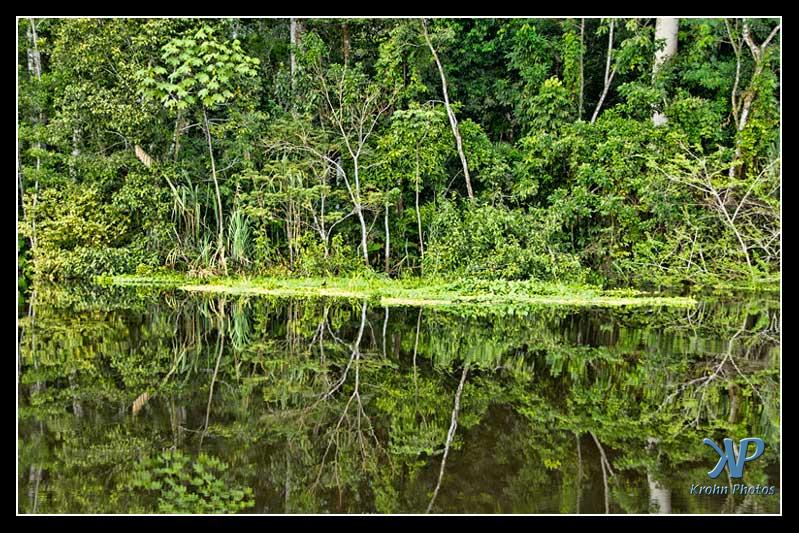 Amazon Jungle in Peru