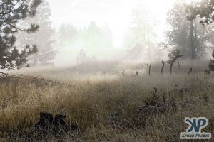 cd174-d01.jpg - Foggy Morning