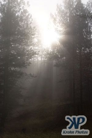 cd174-d04.jpg - Sun shining through the fog
