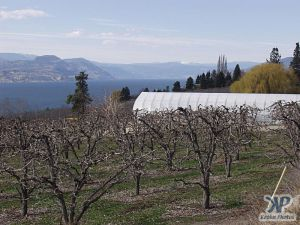 cd70-d22.jpg - Orchards