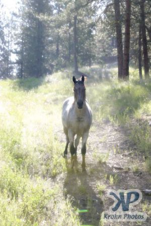 cd74-d01.jpg - Horse