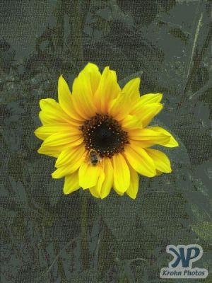 cd16-d06.jpg - Bee and Sunflower