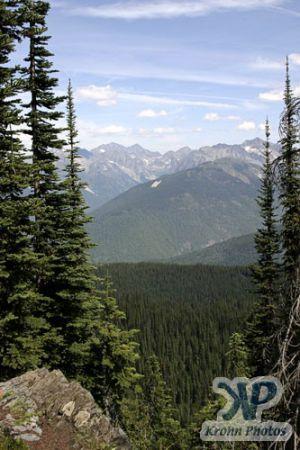 cd170-d07.jpg - Forests