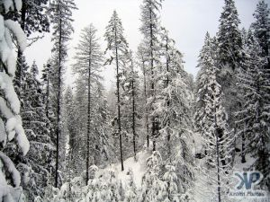 cd73-d02.jpg - Winter Scene