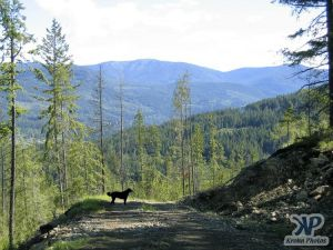 cd73-d04.jpg - A Forest Service Road (FSR)