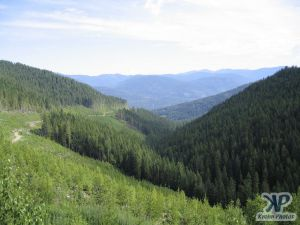 cd73-d07.jpg - Forests