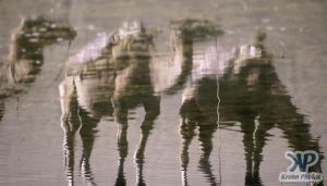 cd1040-s16.jpg - Camel reflections