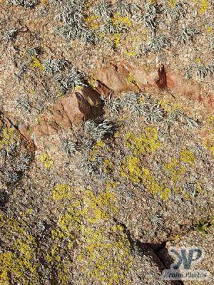 cd22-d06.jpg - Lichens