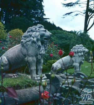 cd20-s27.jpg - Lion statues