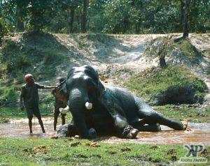 cd1021-s19.jpg - Elephant