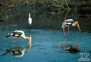 cd1021-s40.jpg - Birds fishing