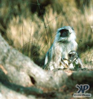 cd1022-s08.jpg - Monkey
