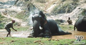 cd1022-s11.jpg - Elephant