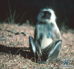 cd1022-s19.jpg - Monkey