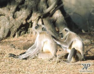 cd1022-s20.jpg - Monkeys