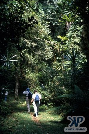 cd80-s25.jpg - Jungle scene