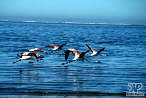 cd11-s14.jpg - Flamingos