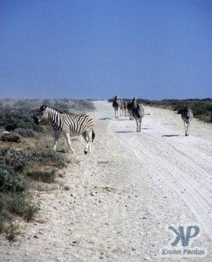 cd110-s03.jpg - Zebras
