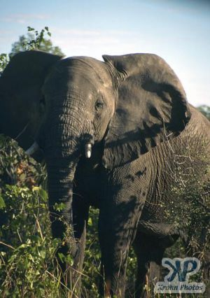 cd13-s07.jpg - Elephant