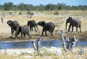 cd13-s29.jpg - Elephant