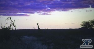 cd14-s08.jpg - African sunset