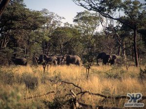 cd14-s18.jpg - Elephants