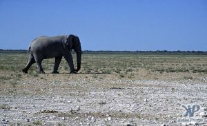 cd14-s27.jpg - Elephant