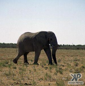 cd14-s28.jpg - Elephant