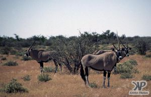 cd14-s33.jpg - Oryx