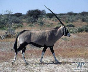 cd14-s34.jpg - Oryx