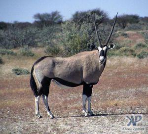 cd14-s35.jpg - Oryx