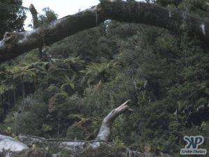 cd35-s05.jpg - Jungle