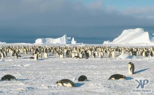 cd1025-s27.jpg - Emperor penguin colony
