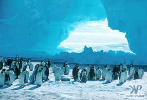 cd1025-s10.jpg - Emperor Penguins