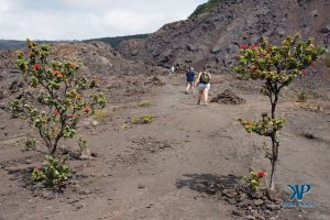 A7-DSC0150.jpg - small trees growing in an old lava flow