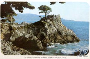 cd2031-pc06.jpg - The Lone Cypress
