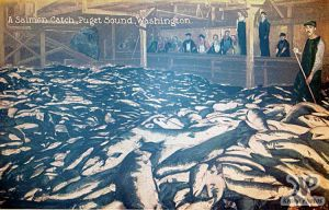 cd2030-pc14.jpg - Salmon Catch