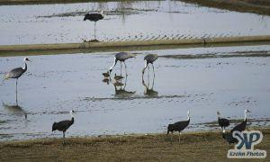 cd1011-d19.jpg - Cranes