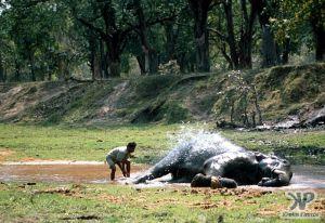cd1021-s05.jpg - Elephant