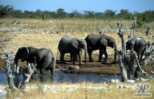 cd12-s30.jpg - Elephants