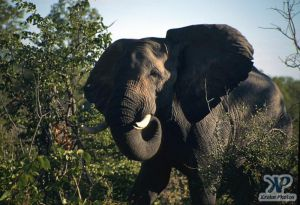 cd13-s08.jpg - Elephant