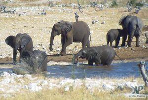 cd13-s30.jpg - Elephant