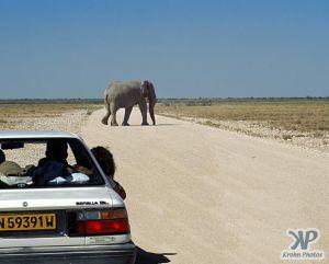 cd13-s37.jpg - Elephant