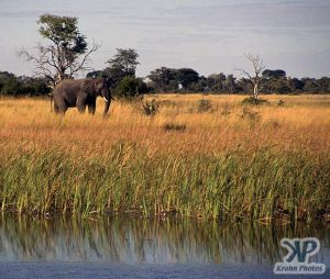 cd14-s12.jpg - Elephant