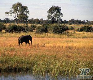 cd14-s13.jpg - Elephant