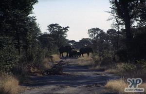 cd14-s16.jpg - Elephants