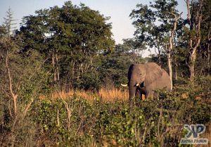 cd14-s19.jpg - Lone Elephant