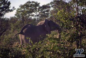 cd14-s20.jpg - Elephant
