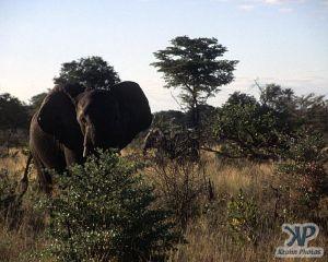 cd14-s21.jpg - Elephant